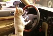 驾驶技巧:科三最难加减档技巧,赶紧看看!