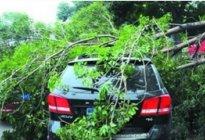 茂名驾校:台风天停车注意事项