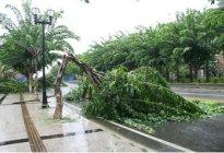 安达驾校百科:大风天气开车要注意哪些细节
