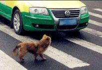 百联驾校:开车撞到狗该不该赔 开车撞到狗怎么办