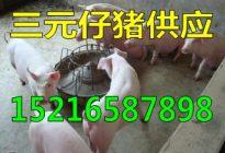 2017年初仔猪价格走势 > 详细信息