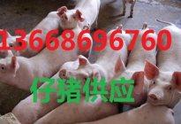 猪苗价格分析动态小仔猪价格近期查询 > 详细信息