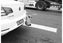 车后塑料袋挂狗被扣2分 深圳:有碍安全驾驶
