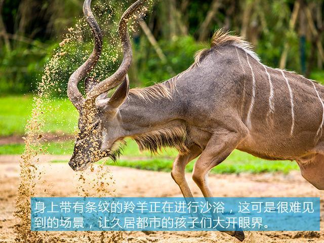 自驾长隆野生动物园,无意闯入猛兽区,有惊无险全靠这辆mpv!