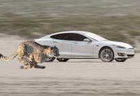 """特斯拉改進彈射起步功能 讓車輛具備""""獵豹姿態""""快速加速"""