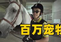 体验北京顶级马术俱乐部,解锁最绅士的运动